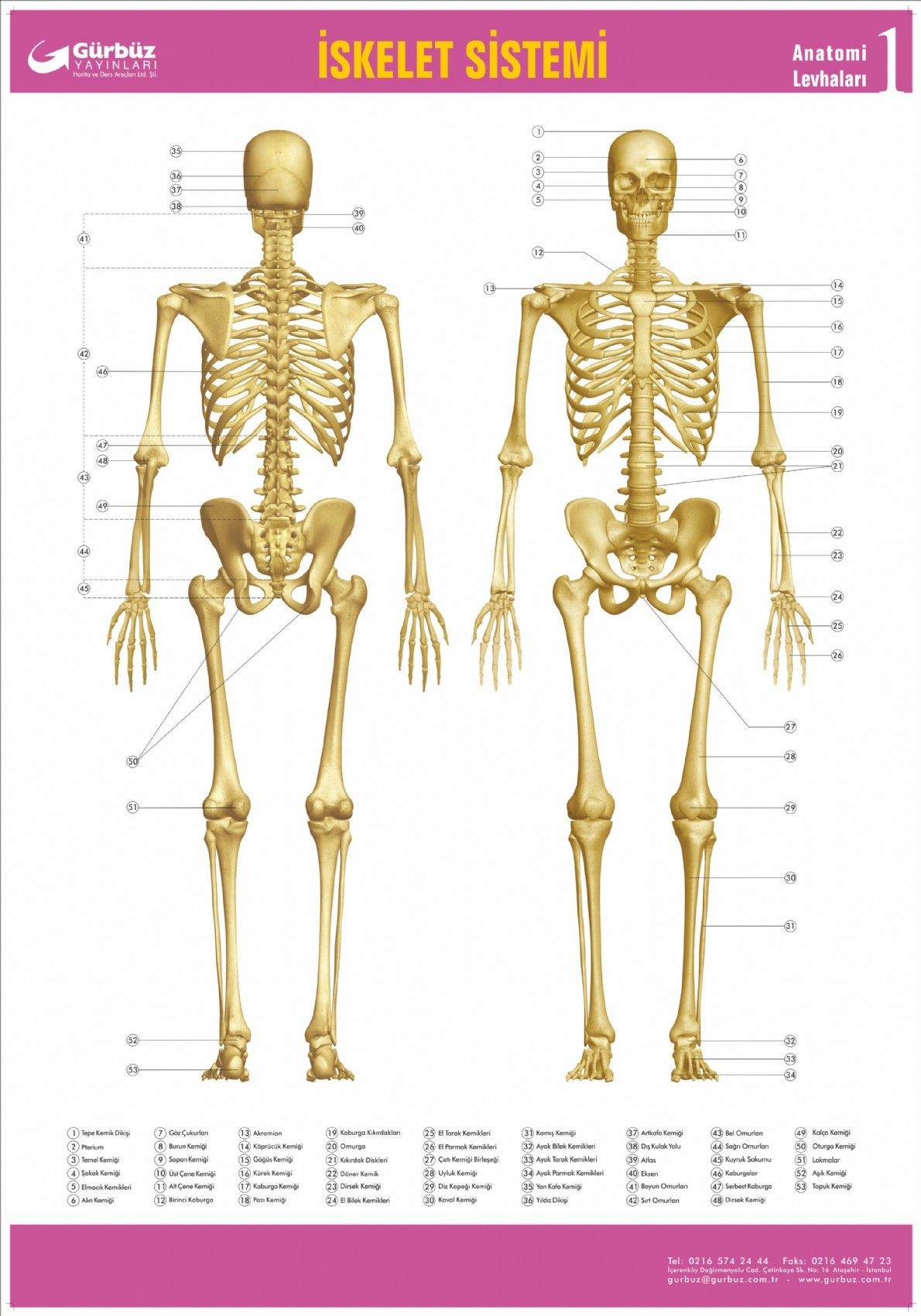 Iskelet Sistemi Levhası 70x100 Gürbüz Yayınları