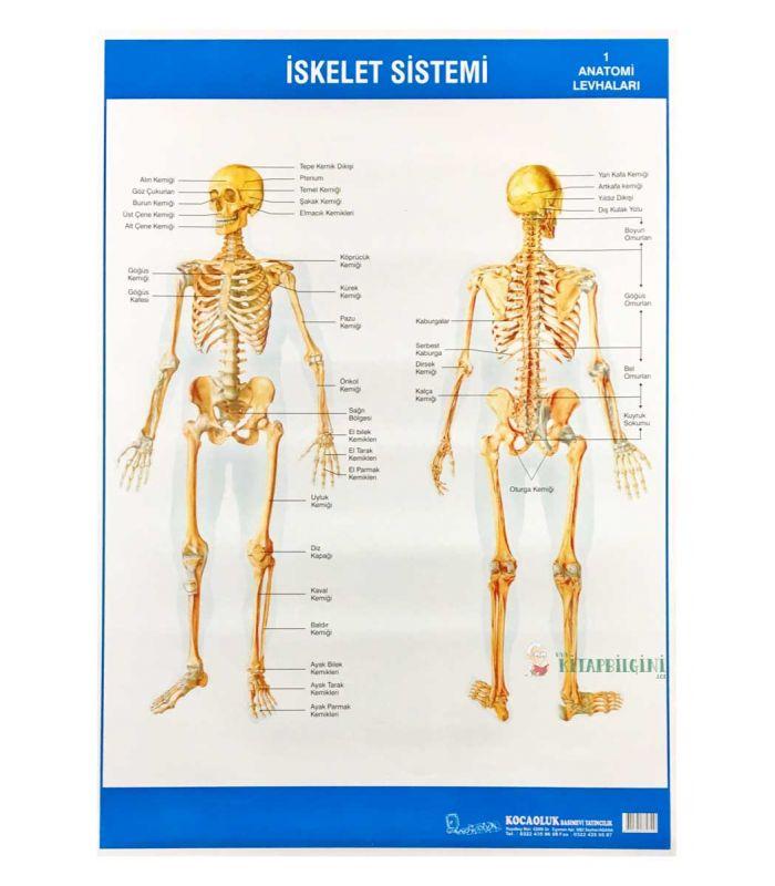 Iskelet Sistemi Levhası 50 X 70 Cm Kocaoluk Yayınları
